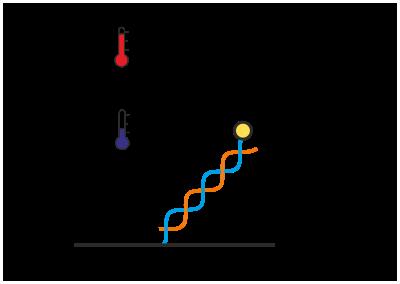 Nanolever Temperature Stability Standard DNA Nanolever
