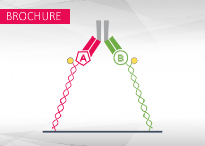 Bifunctional biosensors for the analysis of bispecific antibodies