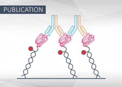 Engineering an anti-HER2 biparatopic antibody with a multimodal mechanism of action