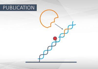 FOXP2 Oligomerization and DNA Binding
