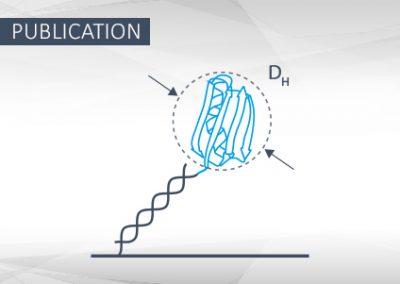 Molecular dynamics of DNA–protein conjugates