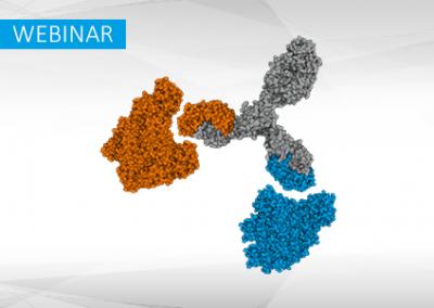 Target selectivity of multispecific antibodies: practical analysis of binding kinetics and avidity