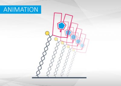 switchSENSE® Conformational Changes